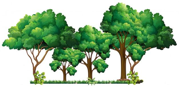 Scena z wieloma drzewami