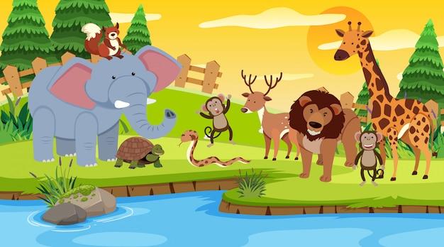 Scena z wieloma dzikimi zwierzętami razem nad rzeką