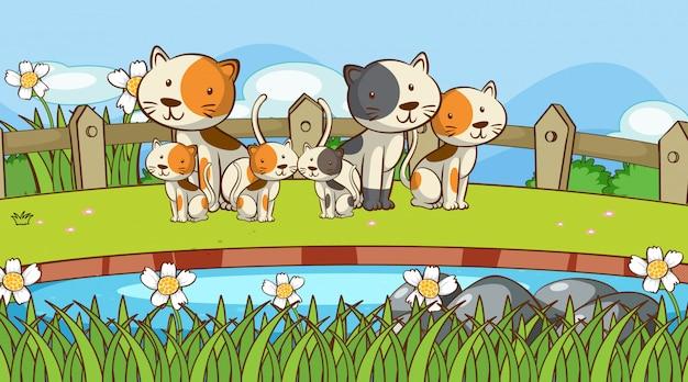 Scena z wieloma kotami w ogrodzie