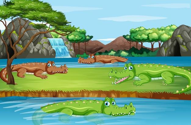 Scena z wieloma krokodylami
