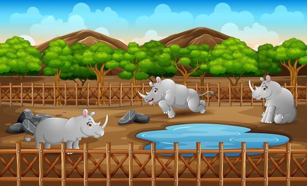 Scena z wieloma nosorożcami mieszkającymi w zoo