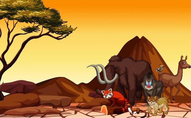 Scena z wieloma zwierzętami na pustyni