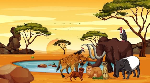 Scena z wieloma zwierzętami na sawannie