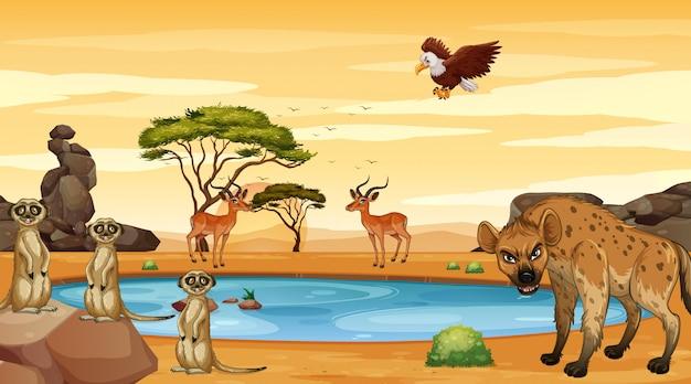 Scena z wieloma zwierzętami nad stawem