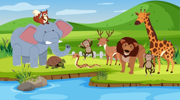 Scena z wieloma zwierzętami stojącymi nad rzeką