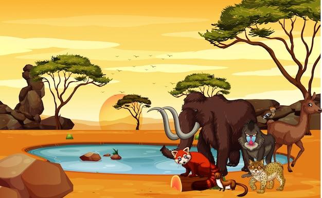 Scena z wieloma zwierzętami w terenie