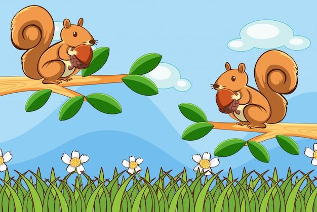 Scena z wiewiórką w parku