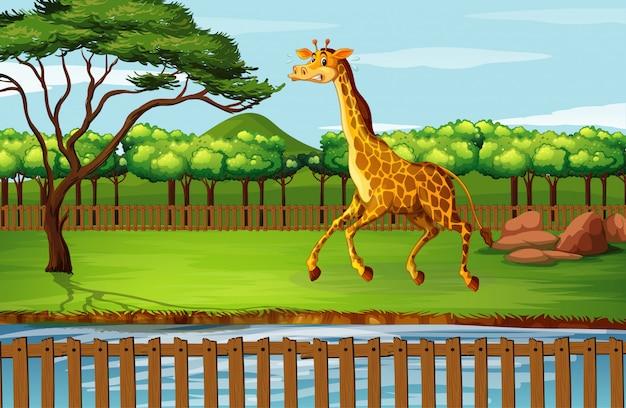 Scena z żyrafą przy zoo
