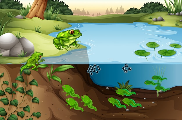 Scena żab w stawie
