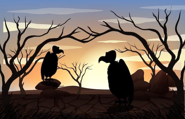 Scena zachód słońca sylwetka odkryty natura