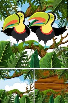 Sceny leśne z ptakami tukana