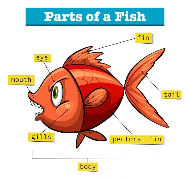 Schemat przedstawiający części ryb