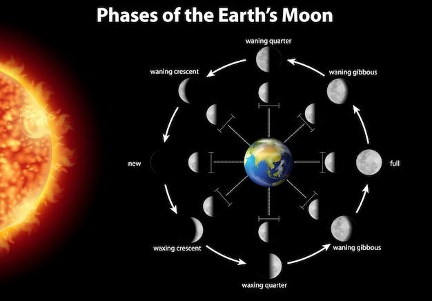 Schemat przedstawiający fazy księżyca na ziemi