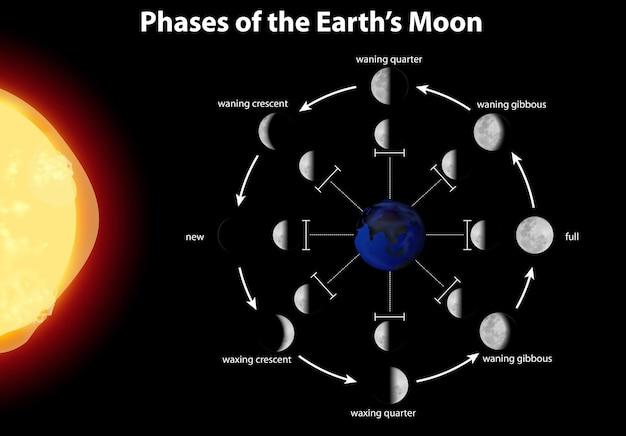 Schemat przedstawiający fazy ziemskiego księżyca