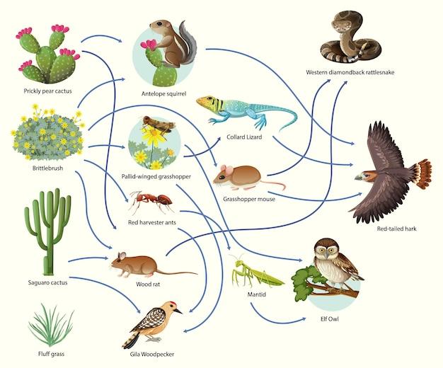 Schemat przedstawiający łańcuch pokarmowy zwierząt na białym tle