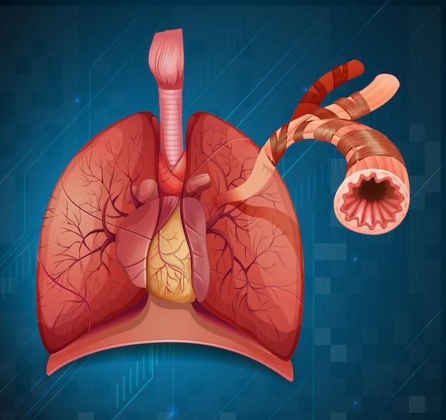 Schemat przedstawiający ludzkie płuco na niebieskim tle