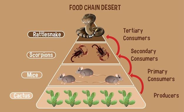 Schemat przedstawiający pustynny łańcuch pokarmowy dla edukacji