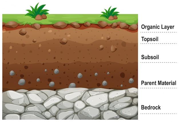 Schemat przedstawiający różne warstwy gleby
