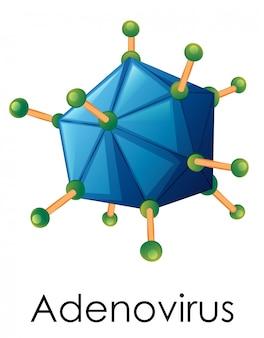 Schemat przedstawiający strukturę adenowirusa