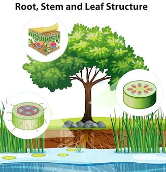 Schemat przedstawiający strukturę rośliny w szczegółach