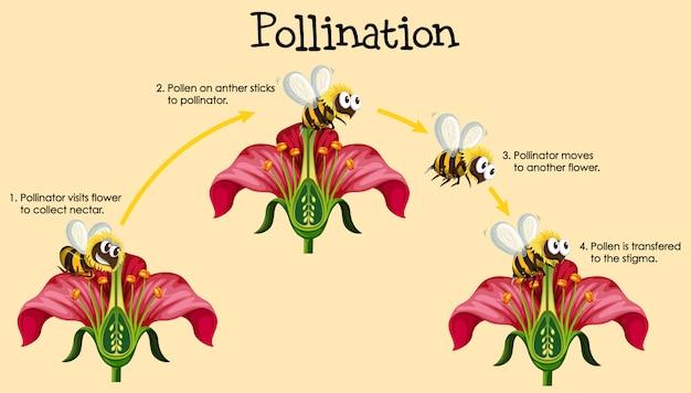 Schemat przedstawiający zapylanie z pszczołą i kwiatami