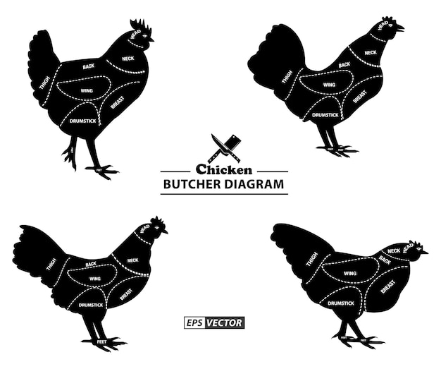 Schemat rzeźnika kurczaka lub część koncepcji wektor eps rzeźnika kury