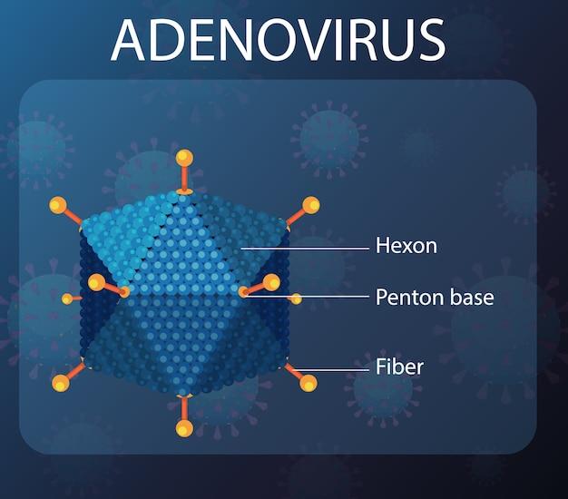 Schemat struktury adenowirusa na tle ikony wirusa