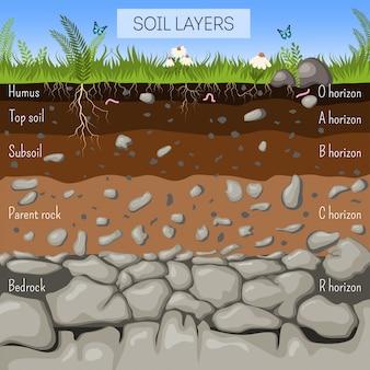 Schemat warstw gleby z trawą, teksturą ziemi, kamieniami, korzeniami roślin, gatunkami podziemnymi.