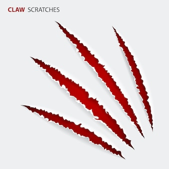 Scratch claws of animal
