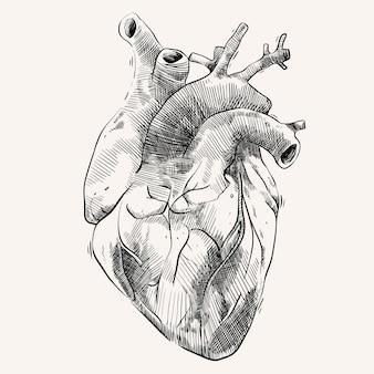 Serce narządów z ręcznie rysowanym stylem szkicu