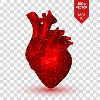 Serce. niskie wielokątne ludzkie serce. streszczenie anatomii narządu.