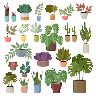 Set domowe rośliny na białym tle.