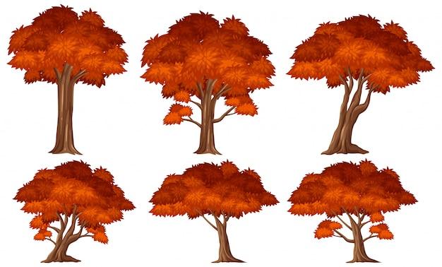 Set drzewo z czerwonymi liśćmi na białym tle