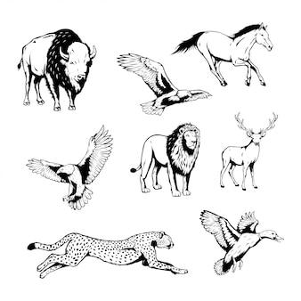 Set dzikie zwierzęta z ręka rysującą wektorową ilustracją