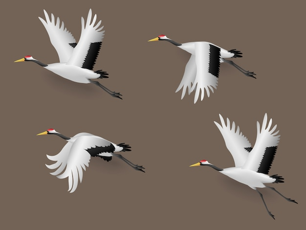 Set ilustracyjni japońscy dźwigowi ptaki lata, wektorowa ilustracja