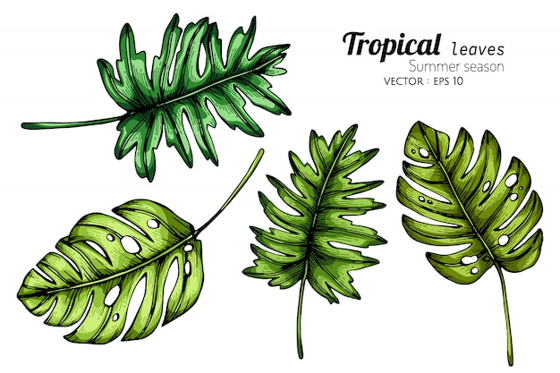 Set tropikalnego liścia rysunkowa ilustracja z kreskową sztuką na białych tło.