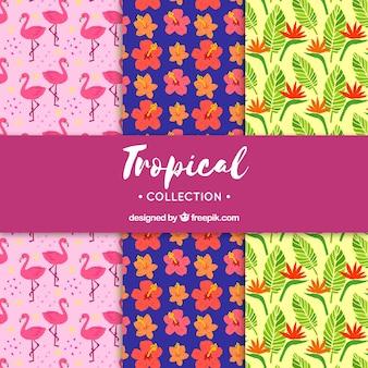 Set tropikalni lato wzory z różnymi roślinami