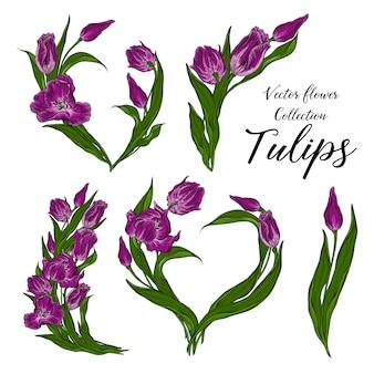 Set wektor rama z ciemnymi różowymi kwiatów tulipanami kwiecistymi.