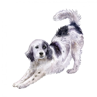 Seter angielski pies w akwareli
