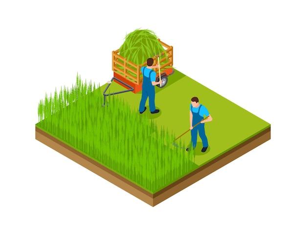 Sezon siana. mężczyźni koszą trawę, robią miejsce na ogród. izometryczne ogrodnictwo, rolnictwo lub hodowla ilustracji wektorowych. rolnictwo, sezon wiejski lato