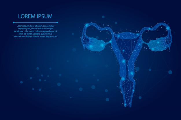 Siatka abstrakcyjna linia i punkt jajniki. niska poli żeńskie narządy rozrodcze macicy i jajników opieka zdrowotna.