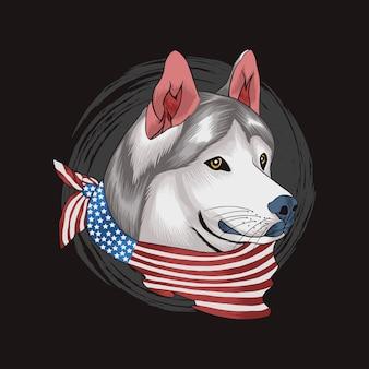 Siberian husky nosi amerykański szalik