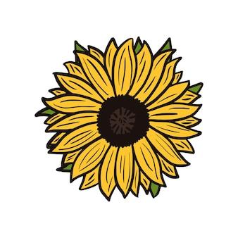Sinflower z liśćmi na białym tle. vintage szkic żółty kwiat.