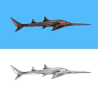 Sixgill sawshark shark z długim nosem morski drapieżne zwierzę morskie życie ręcznie rysowane vintage