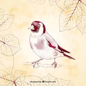 Sketchy ptaka