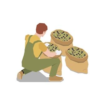 Skład izometryczny produkcji oliwek z ludzkim charakterem pracownika płci męskiej z workami oliwek