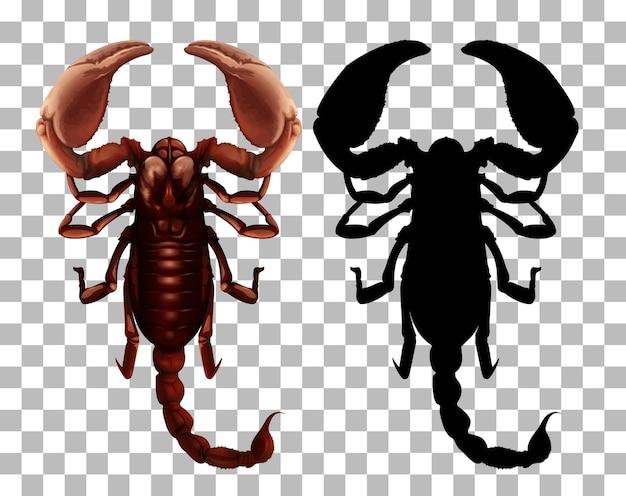 Skorpion na przezroczystym tle