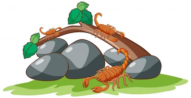 Skorpiony na białym tle