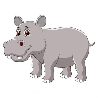 Śliczna hipopotam kreskówka odizolowywająca