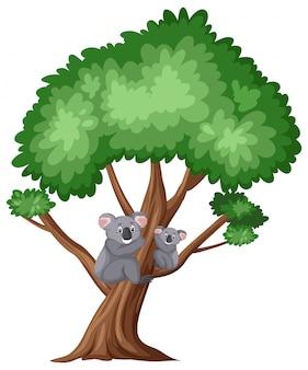 Śliczna koala na dużym drzewie